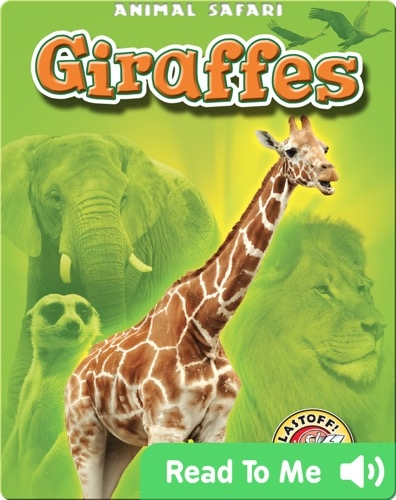 Giraffes: Animal Safari
