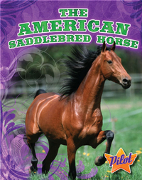 The American Saddlebred Horse