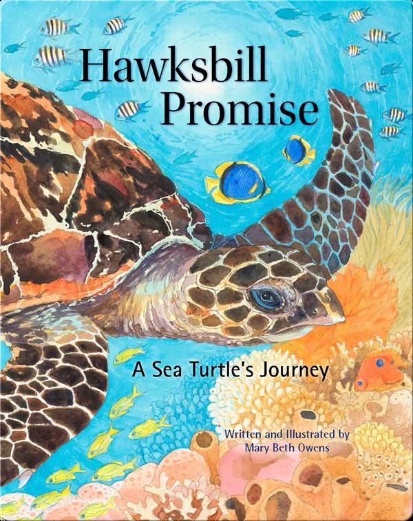 Hawksbill Promise
