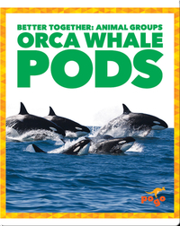 Orca Whales Pods