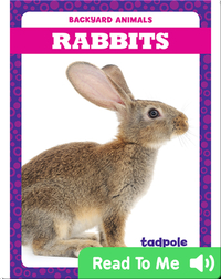 Backyard Animals: Rabbits
