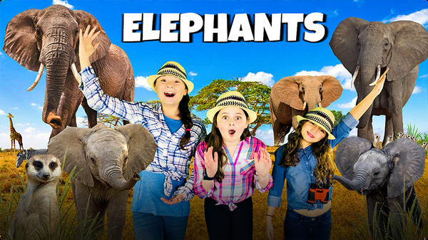 In the Wild With African Elephants