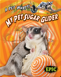 My Pet Sugar Glider
