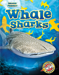 Shark Frenzy: Whale Sharks