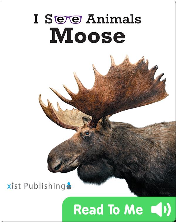 I See Animals: Moose