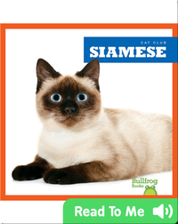 Cat Club: Siamese
