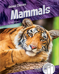 Animal Classes: Mammals