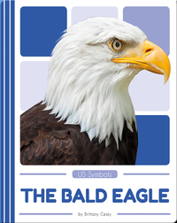 US Symbols: The Bald Eagle