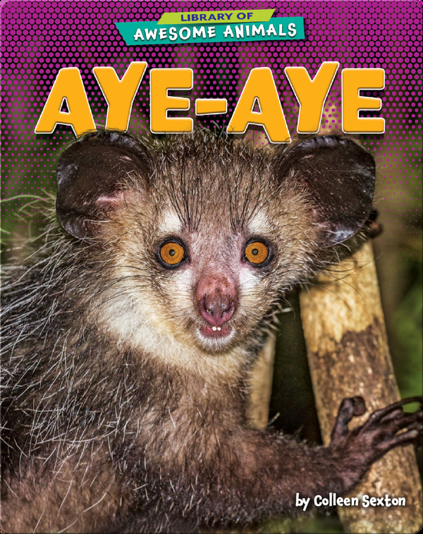 Awesome Animals: Aye-Aye