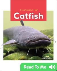 Freshwater Fish: Catfish
