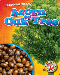 Beginning to End: Acorn to Oak Tree