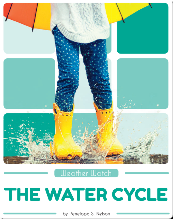 Weather Watch: The Water Cycle