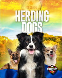 Dog Groups: Herding Dogs