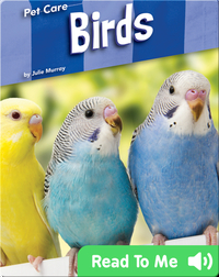 Pet Care: Birds