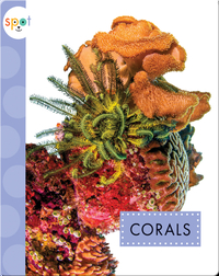 Ocean Animals: Corals