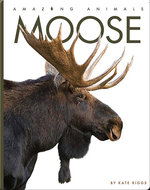 Amazing Animals: Moose
