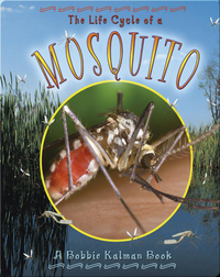 The Life Cycle of a Mosquito