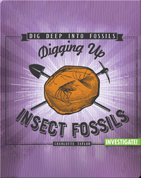 Digging Up Insect Fossils