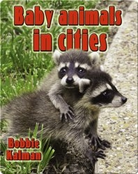 Baby Animals in Cities