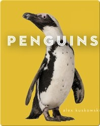 Zoo Animals: Penguins
