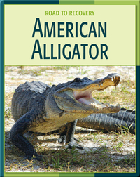 Road To Recovery: American Alligator