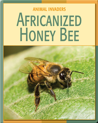 Animal Invaders: Africanized Honey Bee