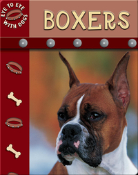 Eye To Eye With Dogs: Boxers