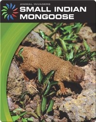 Animal Invaders: Small Indian Mongoose