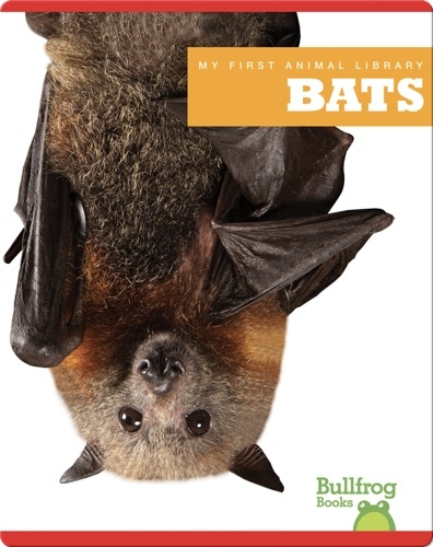 My First Animal Library: Bats