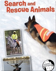 Search And Rescue Animals