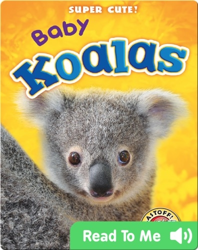 Super Cute! Baby Koalas