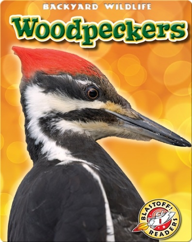 Woodpeckers: Backyard Wildlife