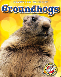 Backyard Wildlife: Groundhogs