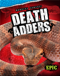 Amazing Snakes! Death Adders