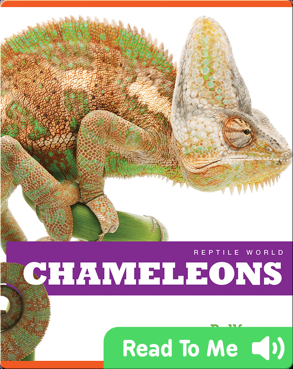 Reptile World: Chameleons