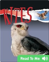Raptors: Kites
