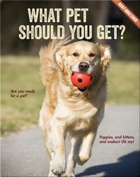 What Pet Should You Get?
