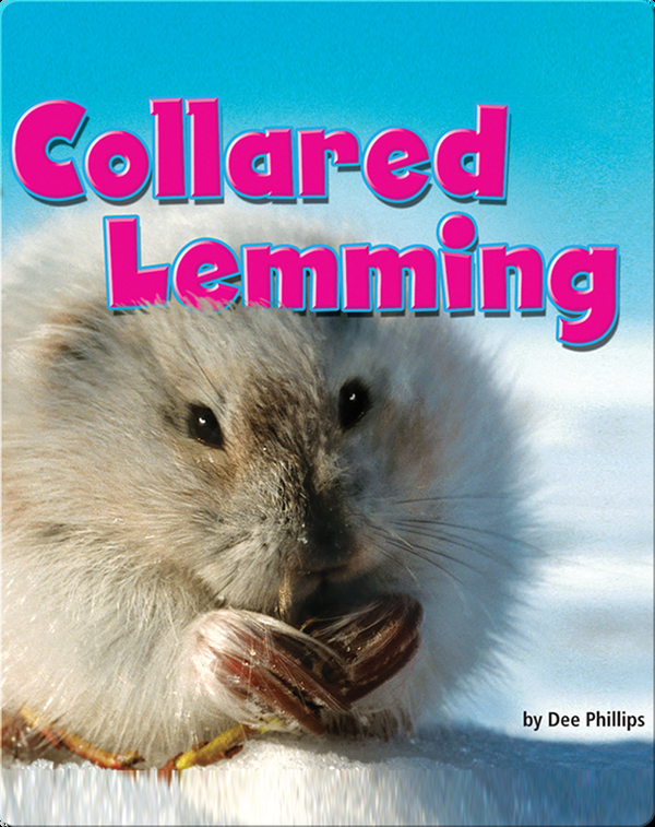 Collared Lemming