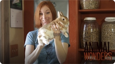 How To Hold A Rabbit