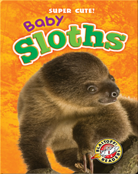 Super Cute! Baby Sloths