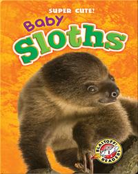 Super Cute! Baby Sloths