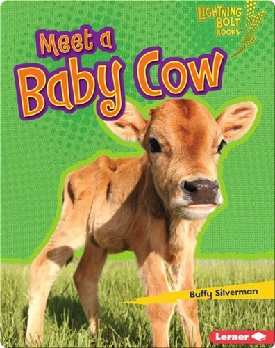 Meet a Baby Cow