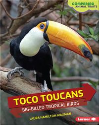 Toco Toucans: Big-Billed Tropical Birds