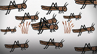 The Great American Locust Plague