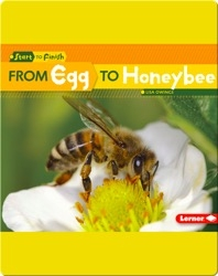 From Egg to Honeybee