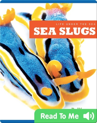 Life Under The Sea: Sea Slugs