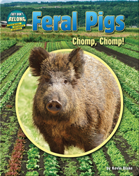 Feral Pigs: Chomp, Chomp!