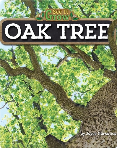 Oak Tree (See It Grow)