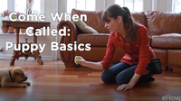 Come When Called 1: Puppy Basics | Teacher's Pet With Victoria Stilwell
