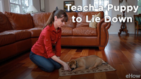 Teach a Puppy to Lie Down | Teacher's Pet With Victoria Stilwell